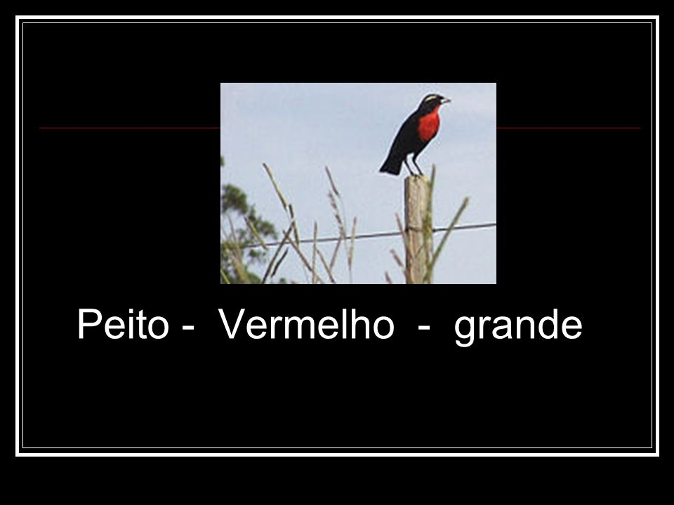 Peito - Vermelho - grande
