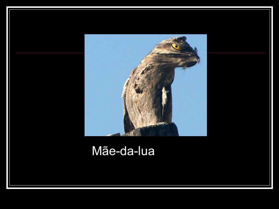 Mãe-da-lua