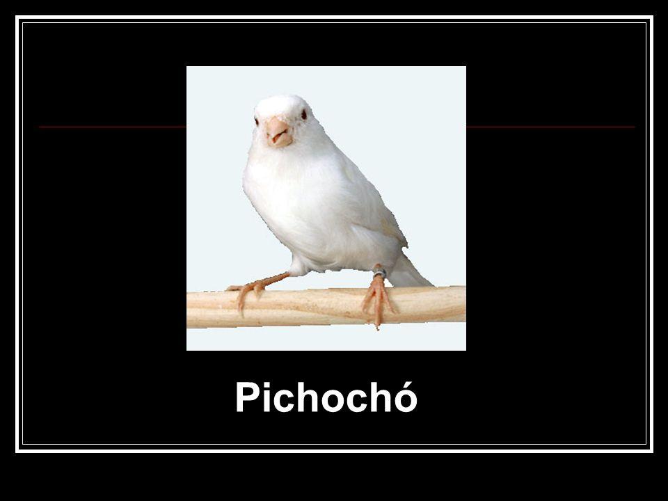 Pichochó