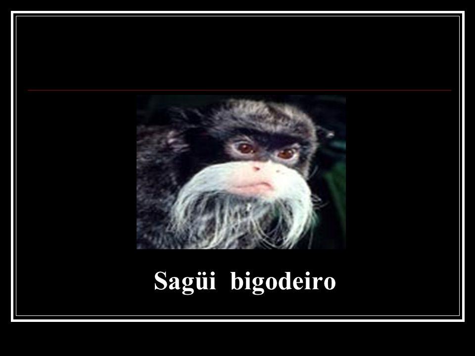 Sagüi bigodeiro