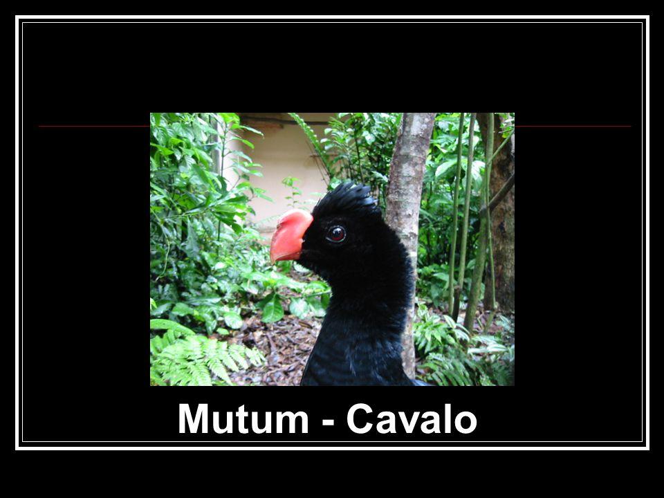 Mutum - Cavalo