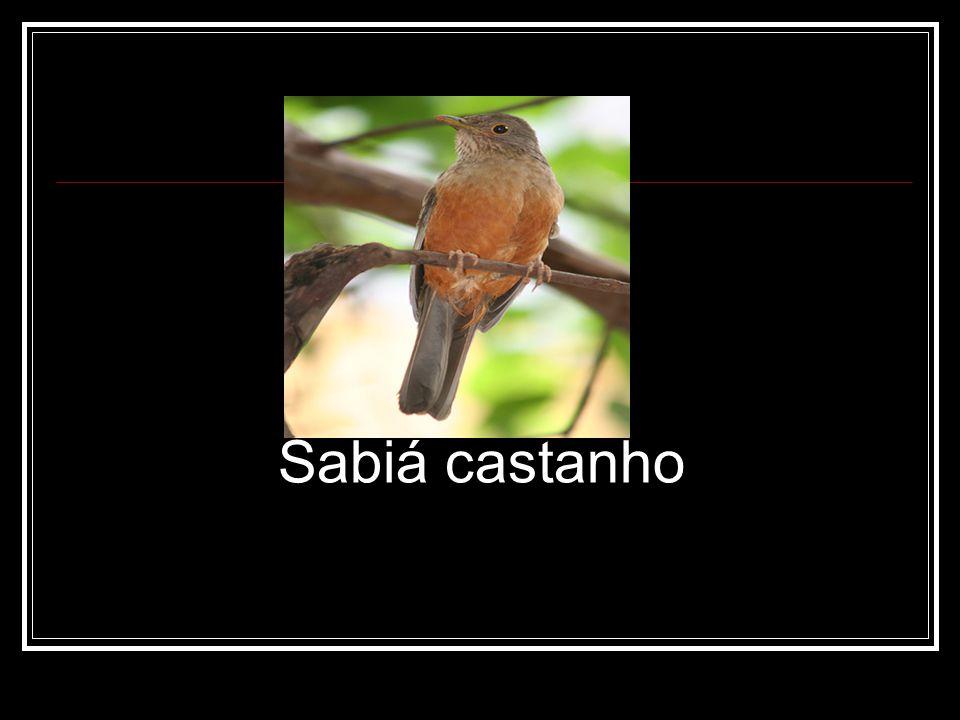 Sabiá castanho