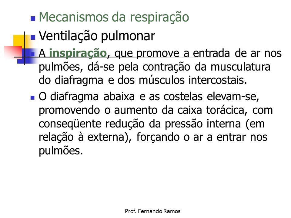 Prof. Fernando Ramos Mecanismos da respiração Ventilação pulmonar A inspiração, que promove a entrada de ar nos pulmões, dá-se pela contração da muscu