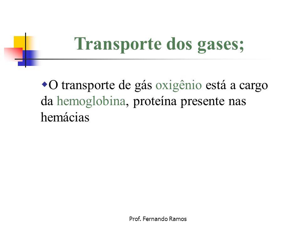 Transporte dos gases; O transporte de gás oxigênio está a cargo da hemoglobina, proteína presente nas hemácias
