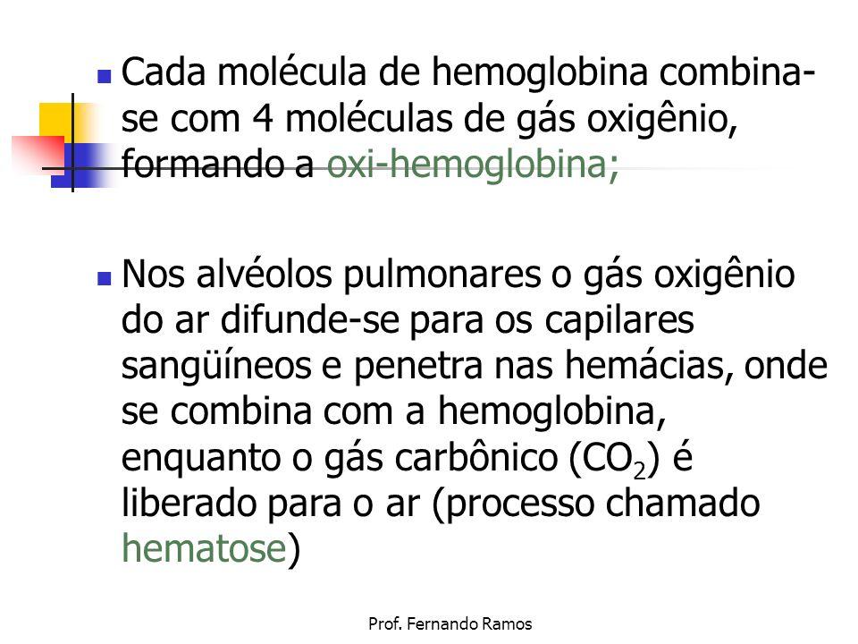 Prof. Fernando Ramos Cada molécula de hemoglobina combina- se com 4 moléculas de gás oxigênio, formando a oxi-hemoglobina; Nos alvéolos pulmonares o g