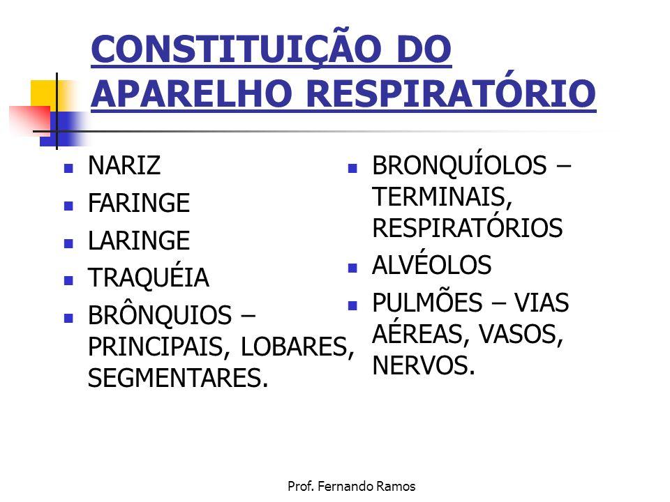 Prof. Fernando Ramos CONSTITUIÇÃO DO APARELHO RESPIRATÓRIO NARIZ FARINGE LARINGE TRAQUÉIA BRÔNQUIOS – PRINCIPAIS, LOBARES, SEGMENTARES. BRONQUÍOLOS –