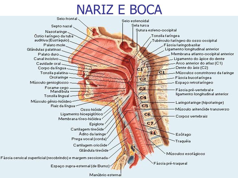 Prof. Fernando Ramos Cânula nasal