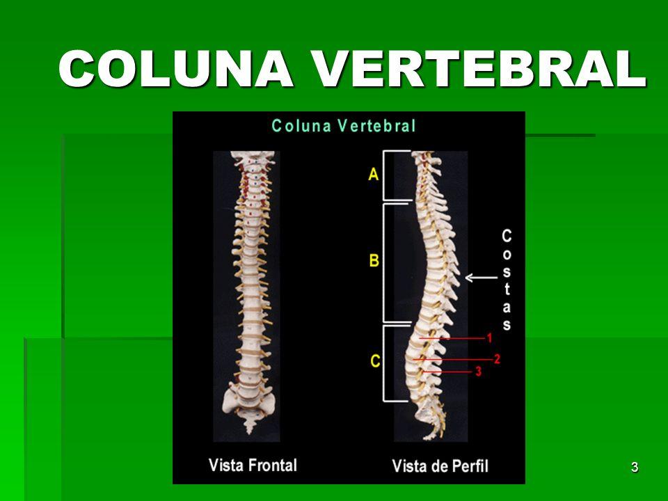 3 COLUNA VERTEBRAL