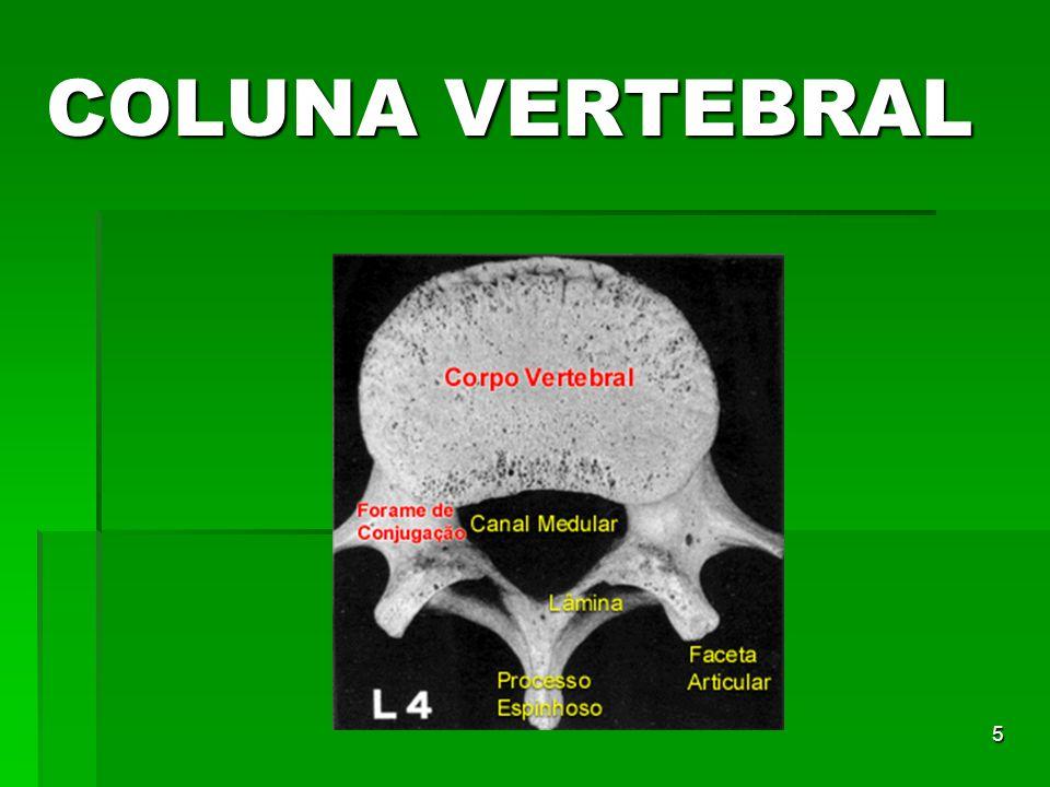6 A primeira vértebra cervical é também, denominada de ATLAS por sustentar o peso da cabeça.