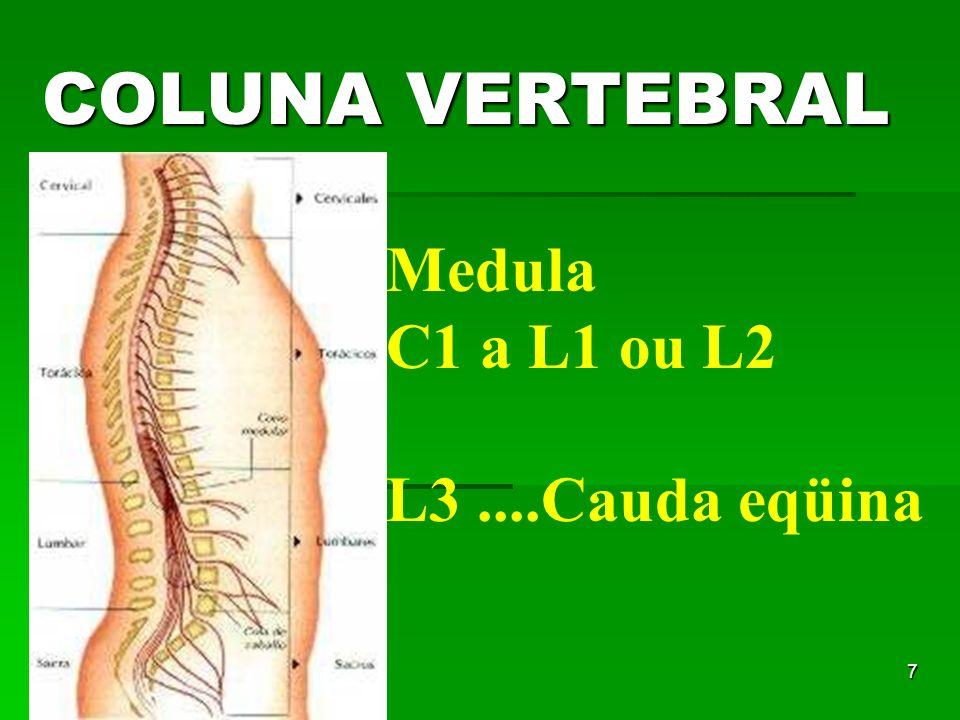 7 COLUNA VERTEBRAL Medula C1 a L1 ou L2 L3....Cauda eqüina