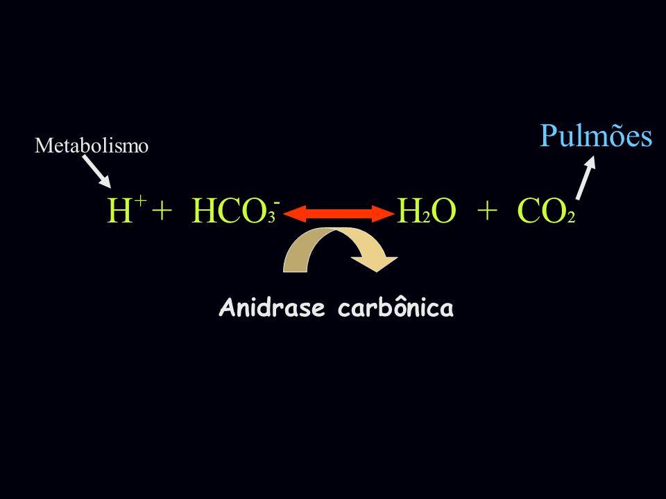 H + HCO 3 H 2 O + CO 2 +- Anidrase carbônica Pulmões Metabolismo