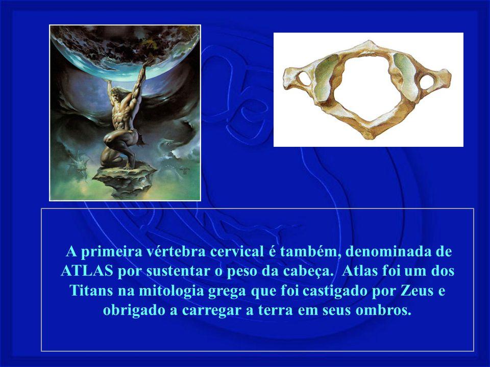 A primeira vértebra cervical é também, denominada de ATLAS por sustentar o peso da cabeça. Atlas foi um dos Titans na mitologia grega que foi castigad