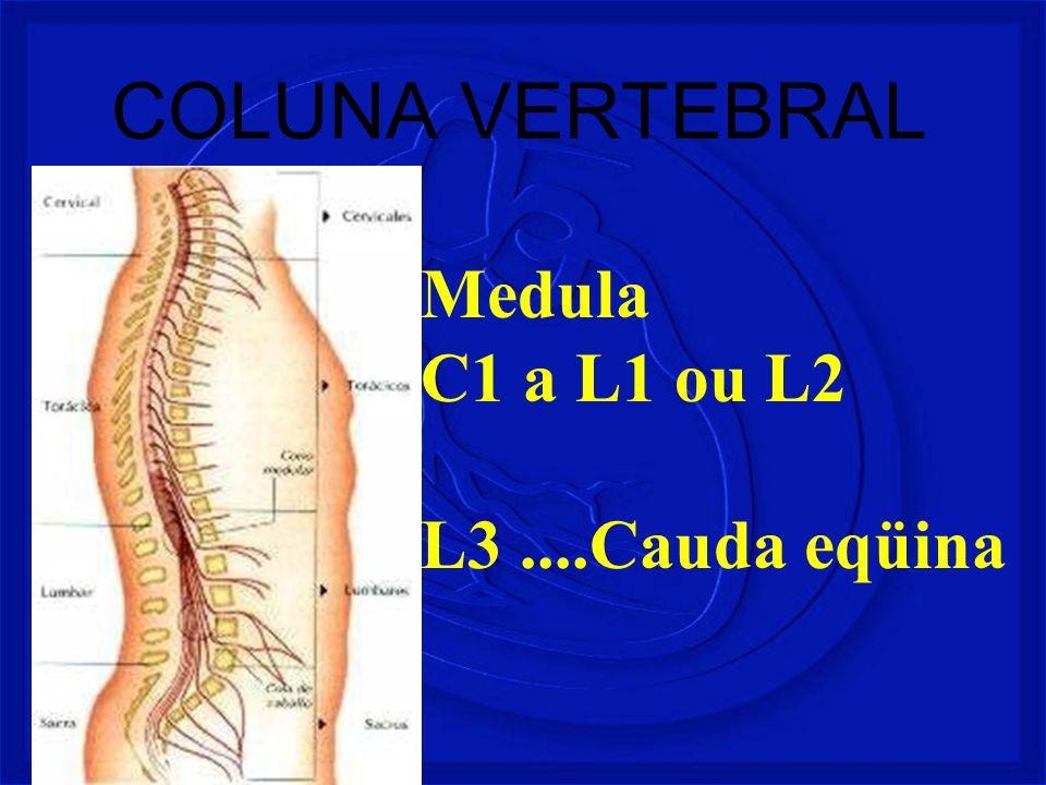 COLUNA VERTEBRAL Medula C1 a L1 ou L2 L3....Cauda eqüina
