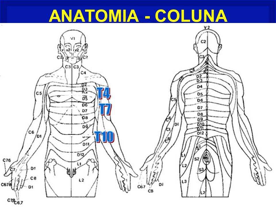ANATOMIA - COLUNA
