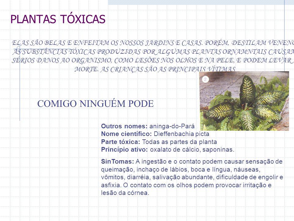PLANTAS TÓXICAS ELAS SÃO BELAS E ENFEITAM OS NOSSOS JARDINS E CASAS. PORÉM, DESTILAM VENENO. AS SUBSTÂNCIAS TÓXICAS PRODUZIDAS POR ALGUMAS PLANTAS ORN