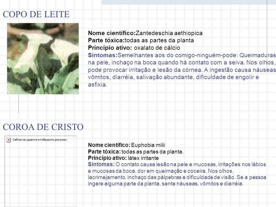 Nome científico:Zantedeschia aethiopica Parte tóxica:todas as partes da planta Princípio ativo: oxalato de cálcio Sintomas:Semelhantes aos do comigo-n