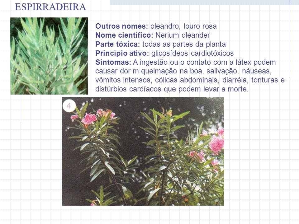Outros nomes: oleandro, louro rosa Nome científico: Nerium oleander Parte tóxica: todas as partes da planta Princípio ativo: glicosídeos cardiotóxicos