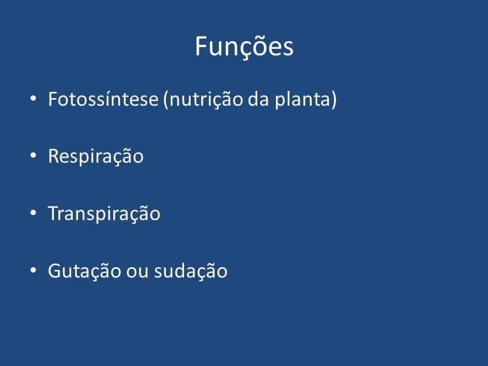 Funções Fotossíntese (nutrição da planta) Respiração Transpiração Gutação ou sudação
