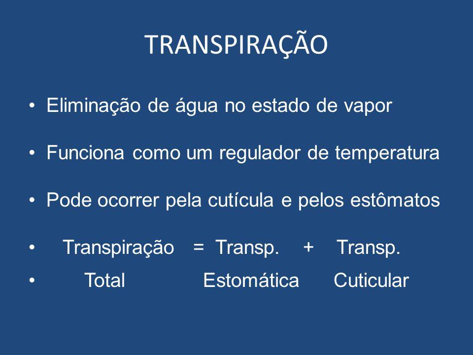 TRANSPIRAÇÃO Eliminação de água no estado de vapor Funciona como um regulador de temperatura Pode ocorrer pela cutícula e pelos estômatos Transpiração