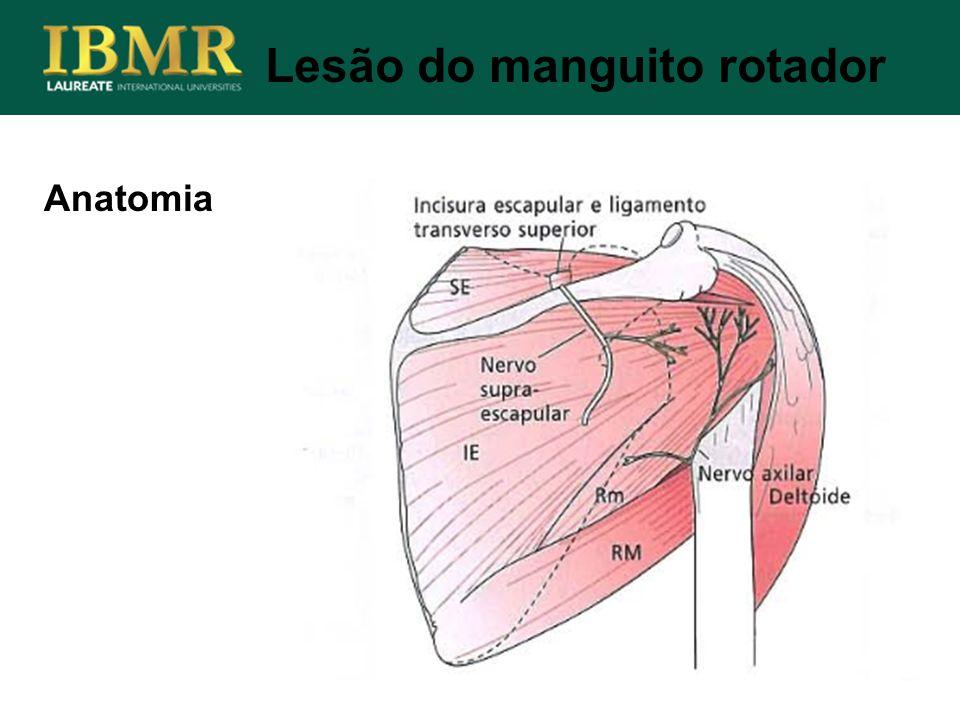 Anatomia Lesão do manguito rotador