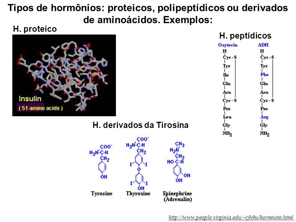Tipos de hormônios: proteicos, polipeptídicos ou derivados de aminoácidos. Exemplos: H. peptídicos H. proteico two polypeptide chains: 21aa, 30aa H. d