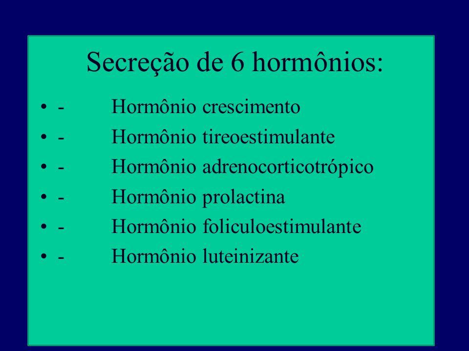 Secreção de 6 hormônios: - Hormônio crescimento - Hormônio tireoestimulante - Hormônio adrenocorticotrópico - Hormônio prolactina - Hormônio foliculoe