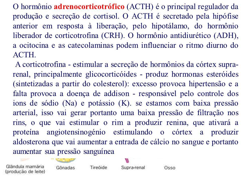 O hormônio adrenocorticotrófico (ACTH) é o principal regulador da produção e secreção de cortisol. O ACTH é secretado pela hipófise anterior em respos
