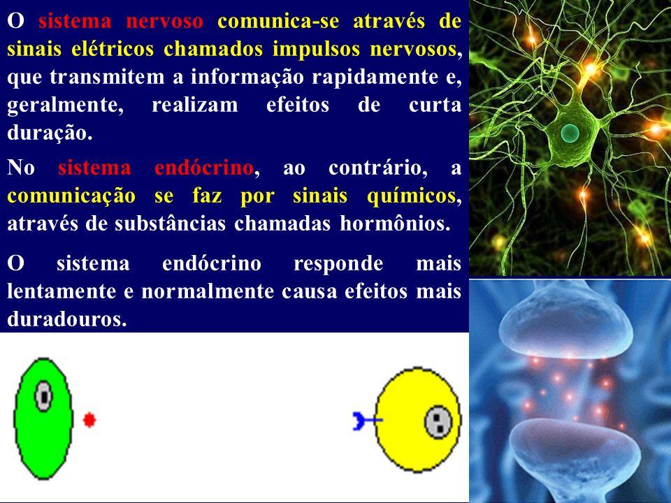 O sistema nervoso comunica-se através de sinais elétricos chamados impulsos nervosos, que transmitem a informação rapidamente e, geralmente, realizam
