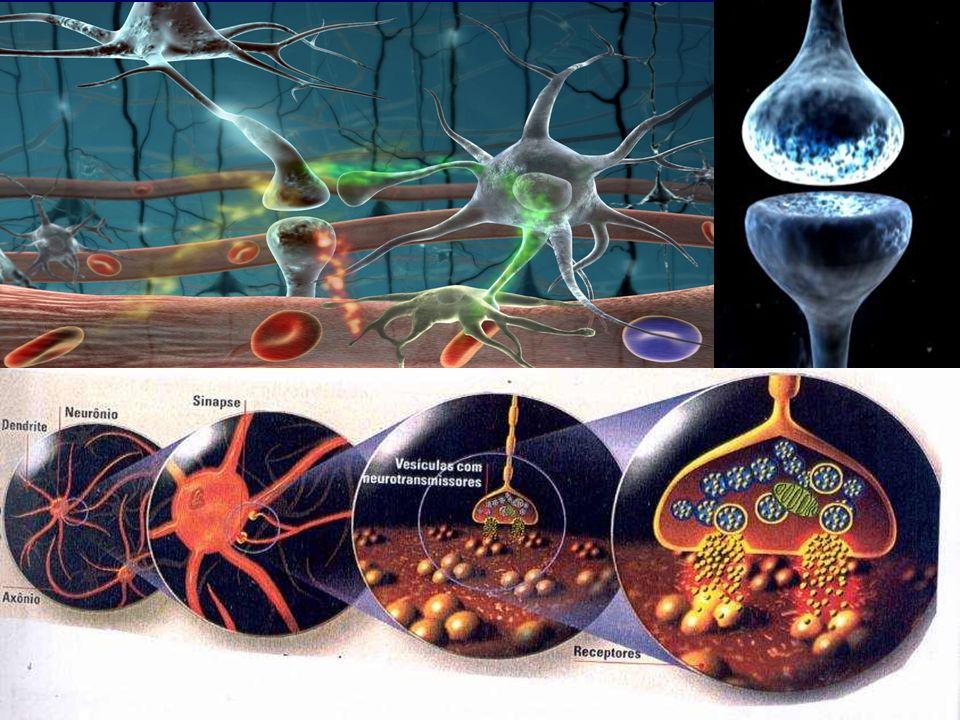 O hormônio tireotrófico (TSH), também chamado de tireotrofina, Apresenta meia vida de 30 a 50 minutos edetermina a produção e liberação de iodotironinas na tireóide, além de hipertrofia do epitélio secretor devido ao aumento do metabolismo e da síntese de RNAm.determinatireóideRNAm Além dos glicocorticóides, a privação alimentar pode reduzir a atividade do eixo hipotálamo- hipófise-tireóide.eixo hipotálamo- hipófise