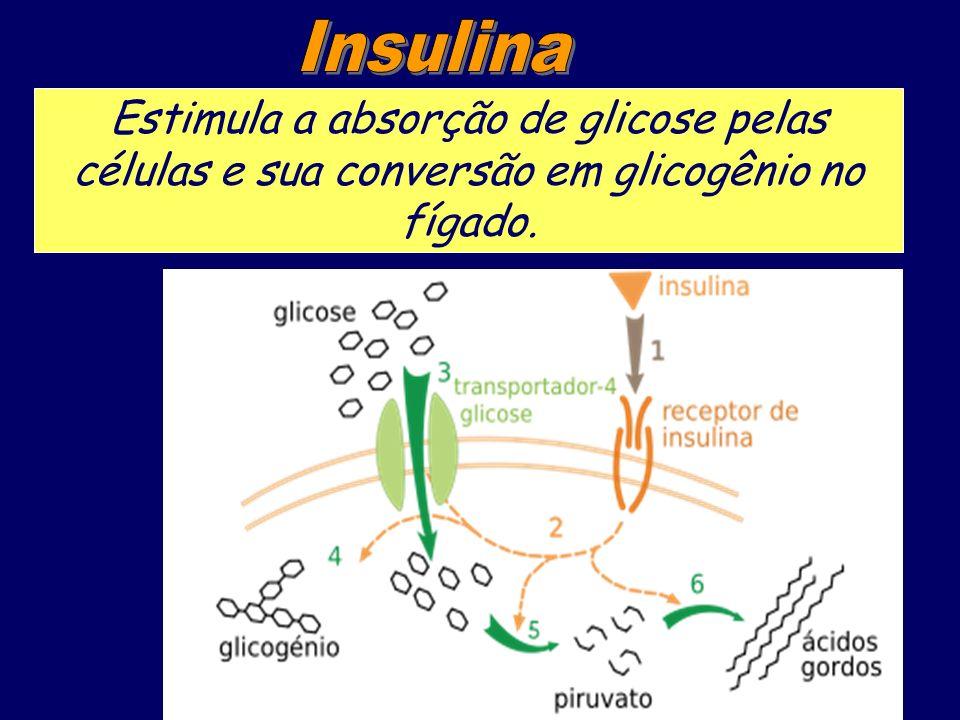 Estimula a absorção de glicose pelas células e sua conversão em glicogênio no fígado.