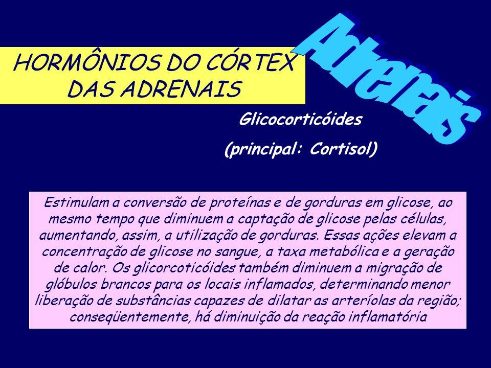 HORMÔNIOS DO CÓRTEX DAS ADRENAIS Glicocorticóides (principal: Cortisol) Estimulam a conversão de proteínas e de gorduras em glicose, ao mesmo tempo qu