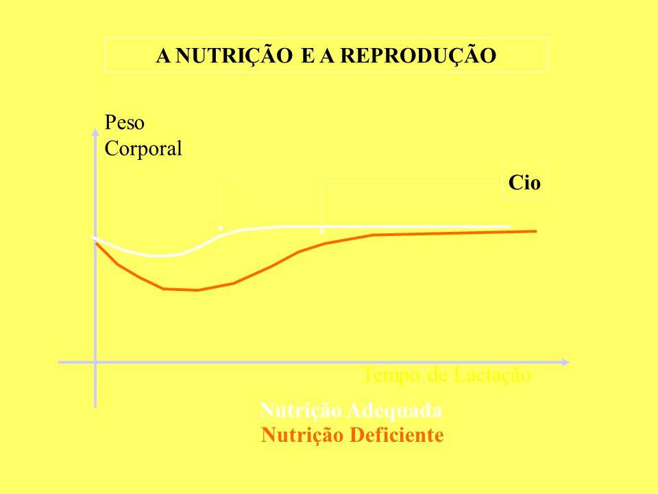 A NUTRIÇÃO E A REPRODUÇÃO Peso Corporal Tempo de Lactação Cio Nutrição Adequada Nutrição Deficiente