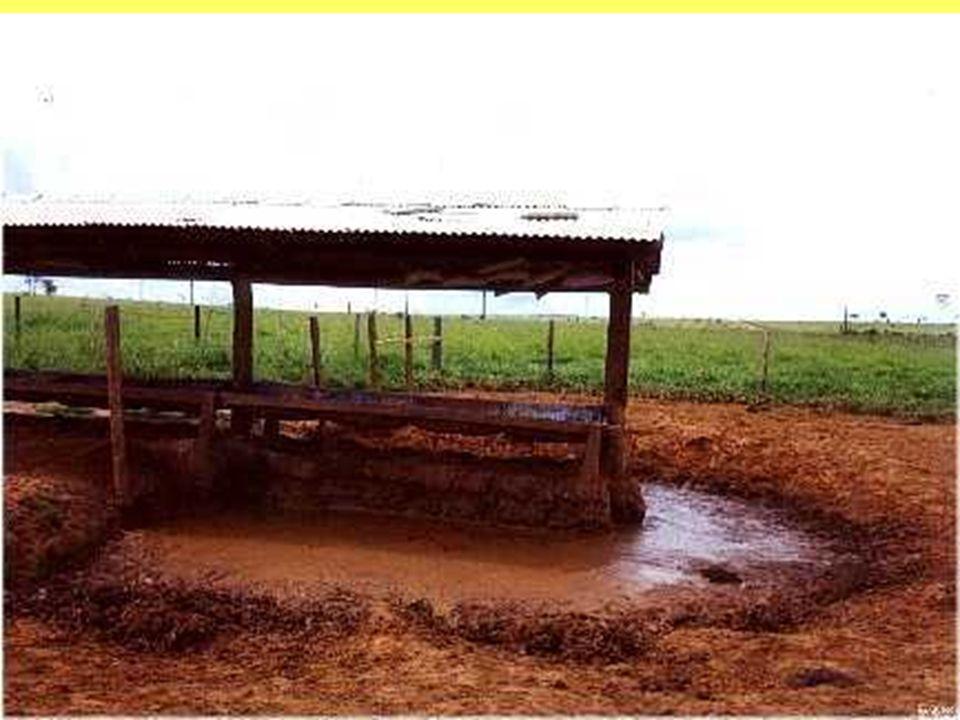 TABELA PRATICA PARA RECOMENDAÇÃO DE RAÇÃO CATEGORIA: BOVINOS DE LEITE VOLUMOSOFINALIDADERAÇAO RECOMENDADA PASTO RUIMManutenção0,5% do Peso Vivo animal- Ração Leite 18% PASTO RUIMProdução até 10 litros1 kg de Ração Leite 18% para cada 3 litros de leite produzido PASTO RUIMProdução 10 a 15 litros1 kg de Ração Leite 20% para cada 3 litros de leite produzido PASTO RUIMProdução acima 15 litros1 kg de Ração Leite 22% para cada 3 litros de leite produzido PASTO INTERMEDIARIO Manutenção0,5% do Peso Vivo animal- Ração Leite 18% PASTO INTERMEDIARIO Produção até 10 litros1 kg de Ração Leite 18% para cada 3 litros de leite produzido PASTO INTERMEDIARIO Produção 10 a 15 litros1 kg de Ração Leite 20% para cada 3 litros de leite produzido PASTO INTERMEDIARIO Produção acima 15 litros1 kg de Ração Leite 22% para cada 3 litros de leite produzido
