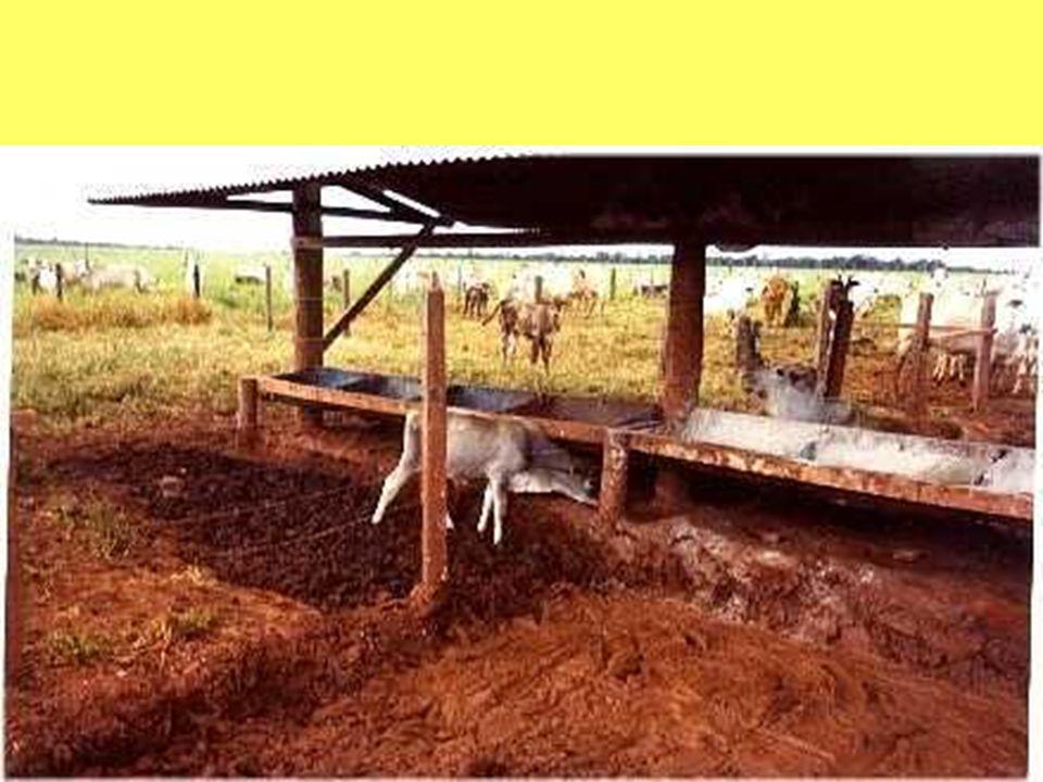 Composição Básica do Produto: Milho moido Farelo de soja alta energia Aveia Branca Farelo de trigo Minerais orgânicos Aminoácidos Vitaminas INDICAÇÃO DE USO: Animais adultos: 1% do peso vivo.
