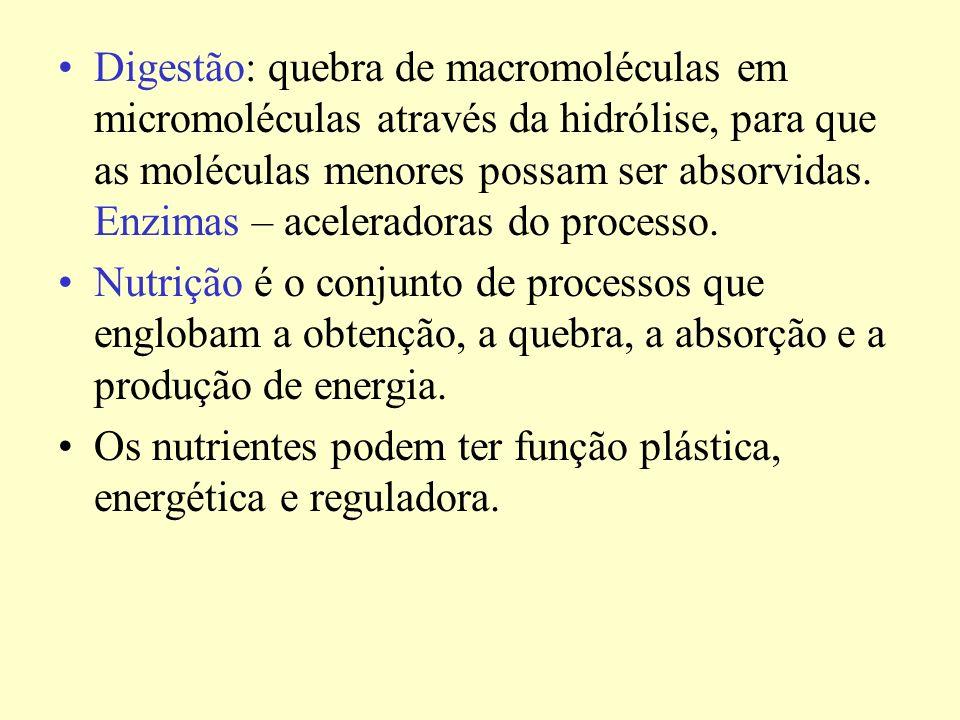 Digestão: quebra de macromoléculas em micromoléculas através da hidrólise, para que as moléculas menores possam ser absorvidas.