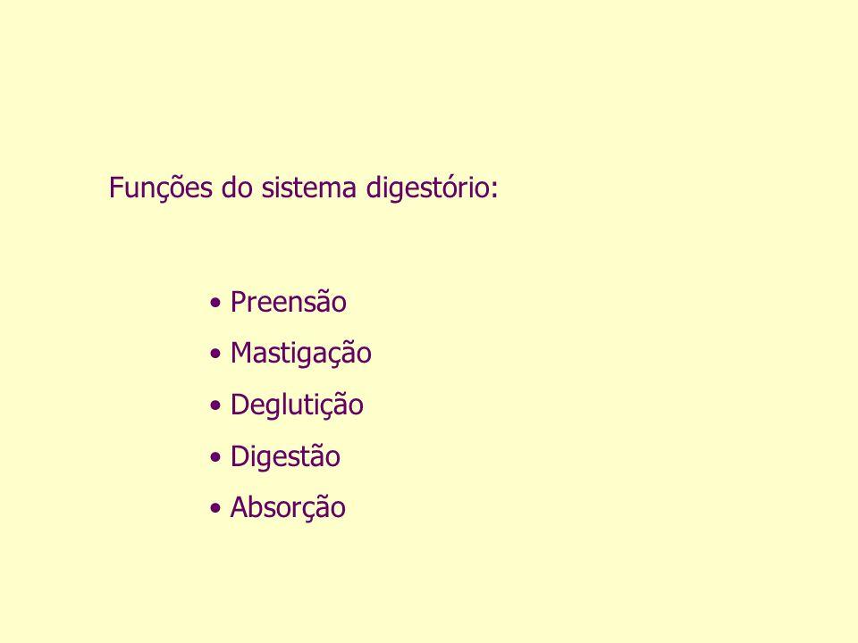 Funções do sistema digestório: Preensão Mastigação Deglutição Digestão Absorção