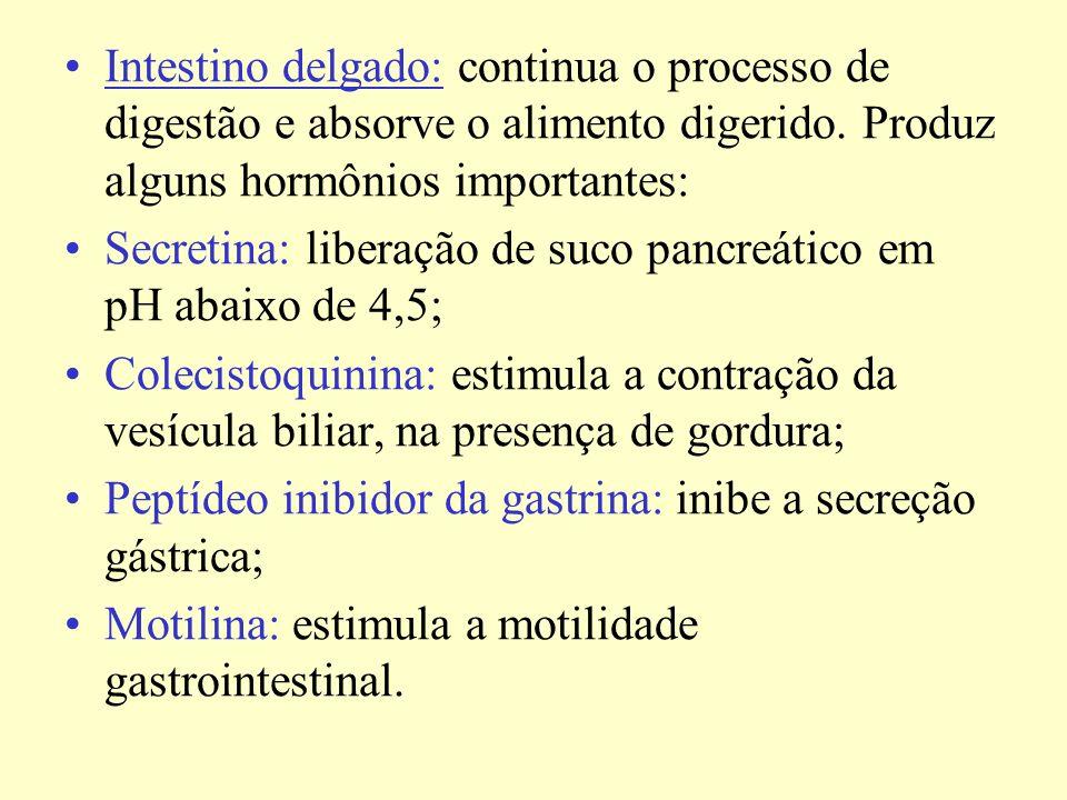 Intestino delgado: continua o processo de digestão e absorve o alimento digerido.