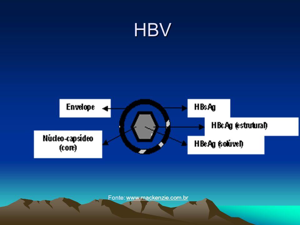 HBV Fonte: www.mackenzie.com.br