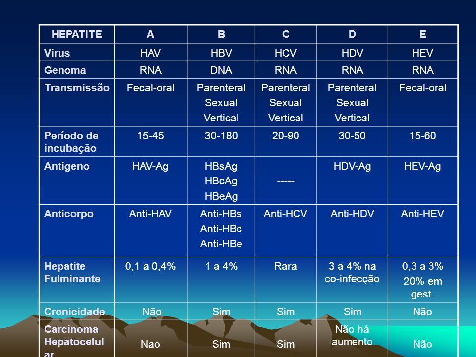 HEPATITEABCDE VírusHAVHBVHCVHDVHEV GenomaRNADNARNA TransmissãoFecal-oralParenteral Sexual Vertical Parenteral Sexual Vertical Parenteral Sexual Vertic