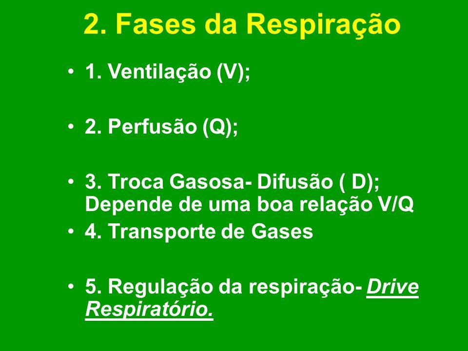 2. Fases da Respiração 1. Ventilação (V); 2. Perfusão (Q); 3. Troca Gasosa- Difusão ( D); Depende de uma boa relação V/Q 4. Transporte de Gases 5. Reg