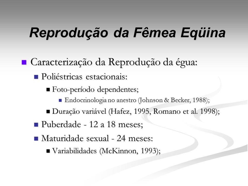 Introdução Fonte: Lewis, 2000.