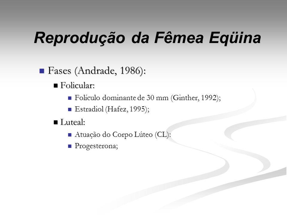 Reprodução da Fêmea Eqüina Ciclo estral: Ciclo estral: Definição: Stanbenfelt & Edqvist (1996); Definição: Stanbenfelt & Edqvist (1996); Fases: Fases: