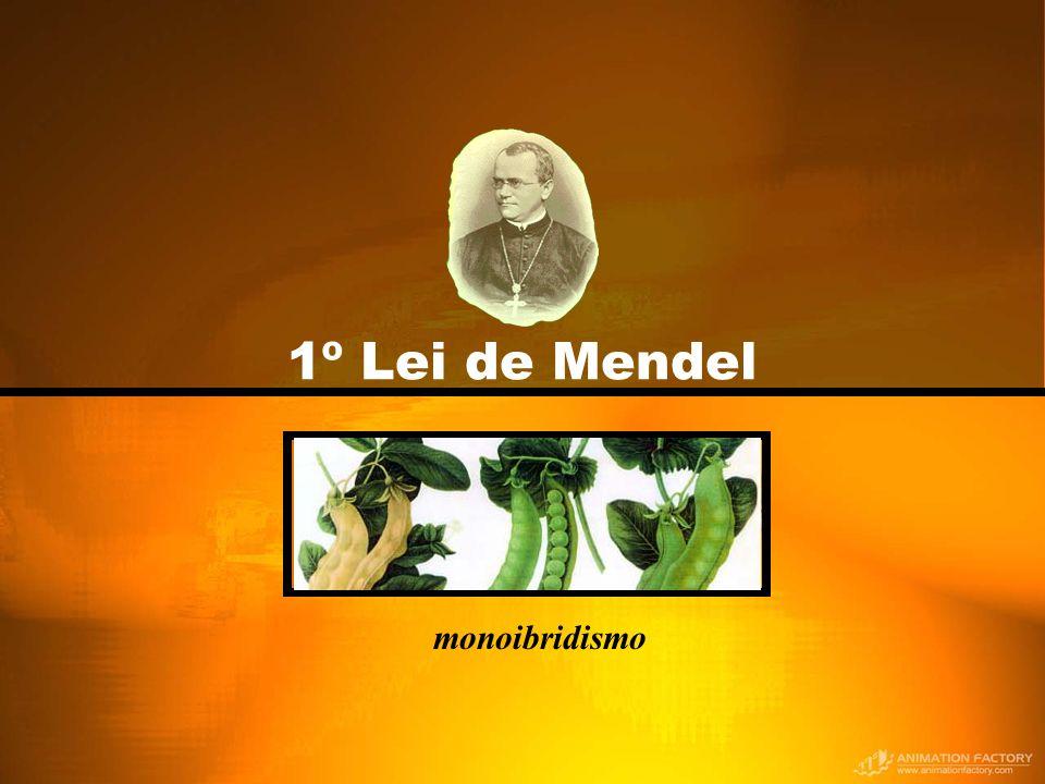 1º Lei de Mendel monoibridismo