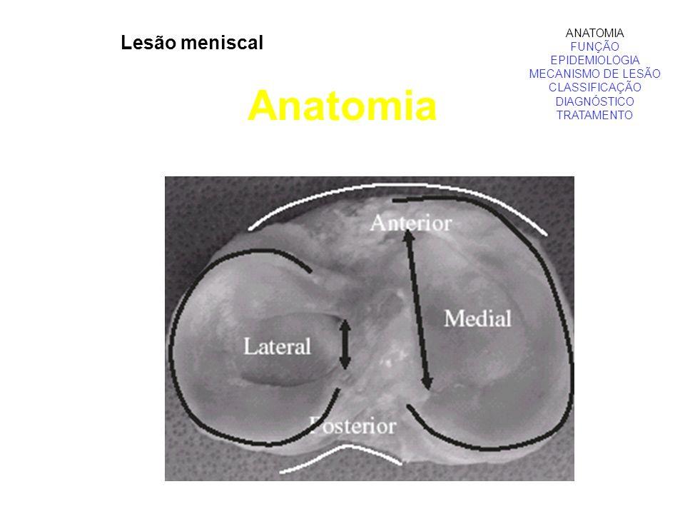 Anatomia ANATOMIA FUNÇÃO EPIDEMIOLOGIA MECANISMO DE LESÃO CLASSIFICAÇÃO DIAGNÓSTICO TRATAMENTO