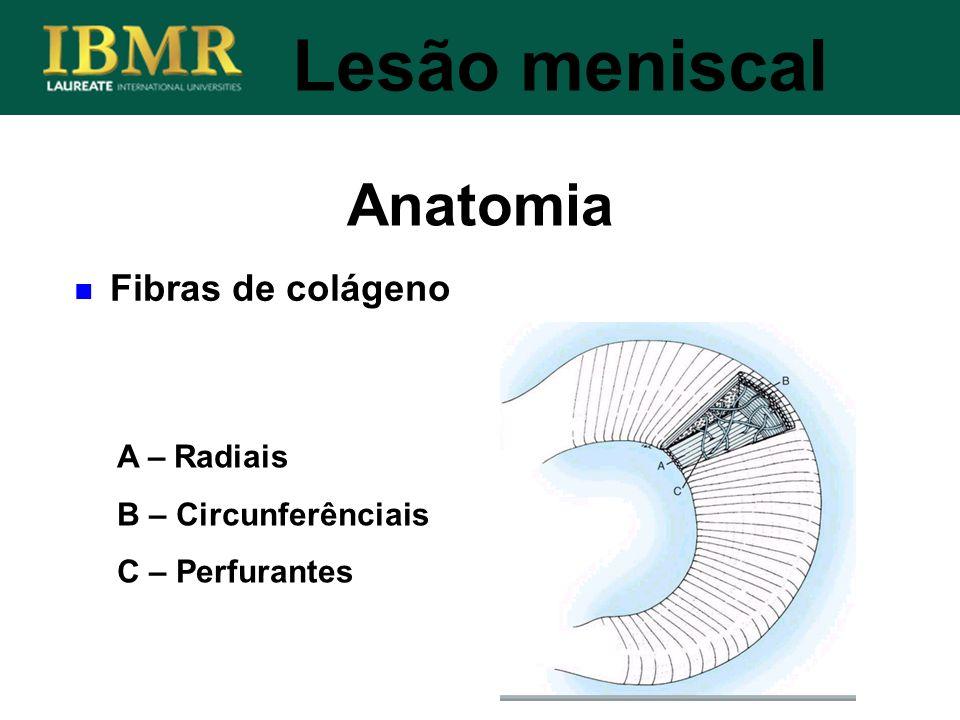Anatomia Lesão meniscal A – Radiais B – Circunferênciais C – Perfurantes Fibras de colágeno