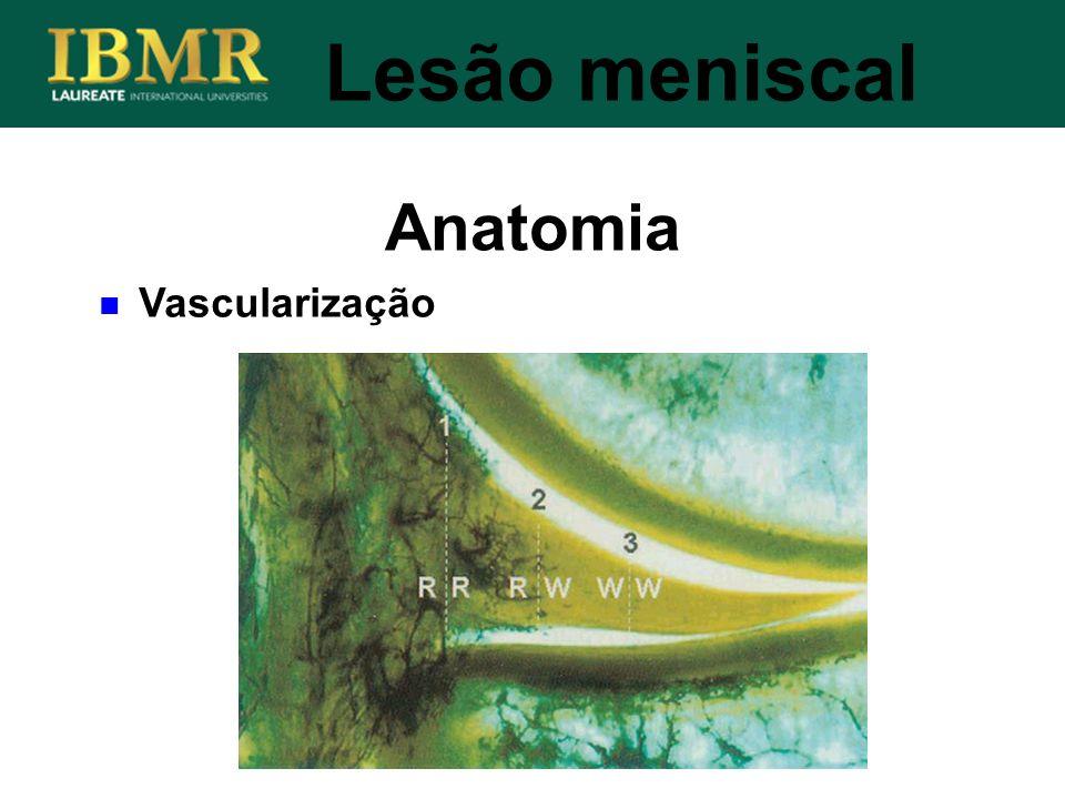 Anatomia Lesão meniscal Vascularização