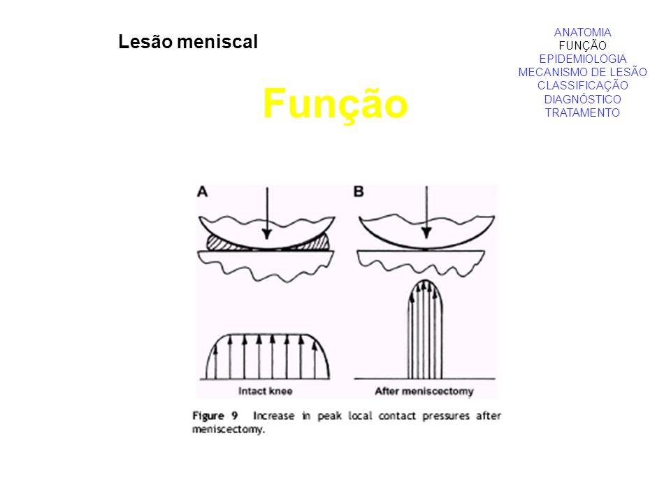 Lesão meniscal Função ANATOMIA FUNÇÃO EPIDEMIOLOGIA MECANISMO DE LESÃO CLASSIFICAÇÃO DIAGNÓSTICO TRATAMENTO