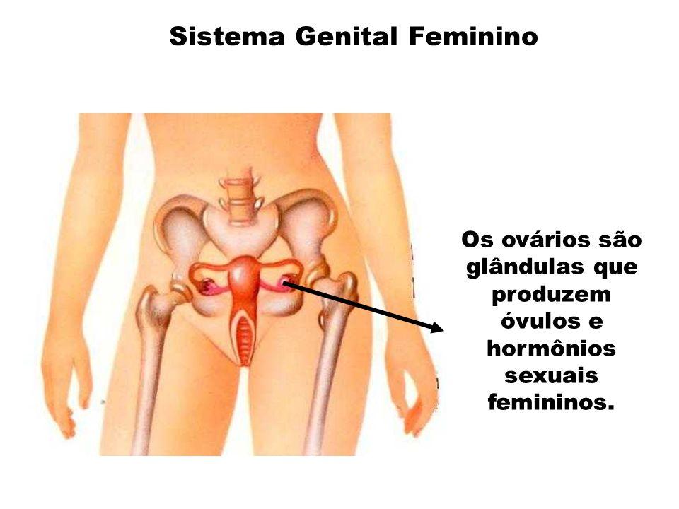 Os ovários são glândulas que produzem óvulos e hormônios sexuais femininos. Sistema Genital Feminino