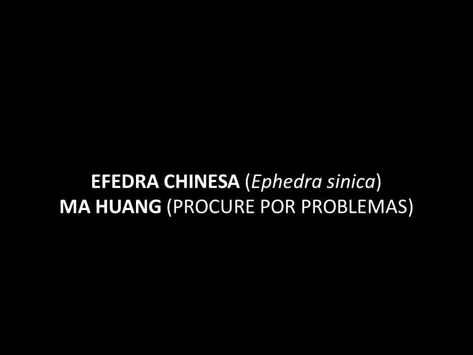 EFEDRA CHINESA (Ephedra sinica) MA HUANG (PROCURE POR PROBLEMAS)