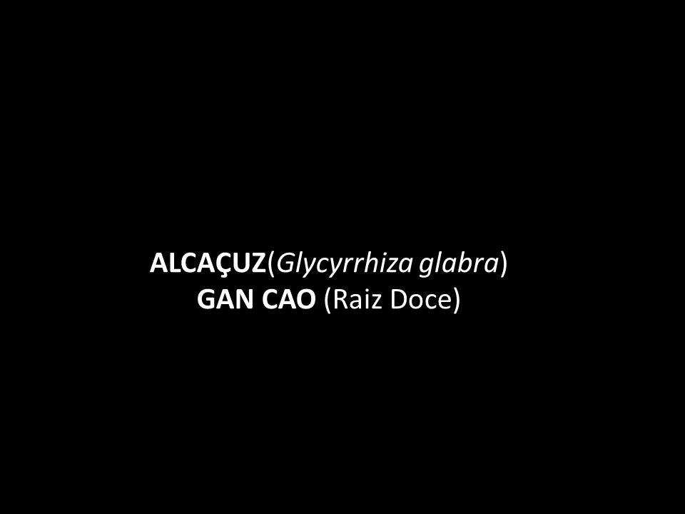 ALCAÇUZ(Glycyrrhiza glabra) GAN CAO (Raiz Doce)